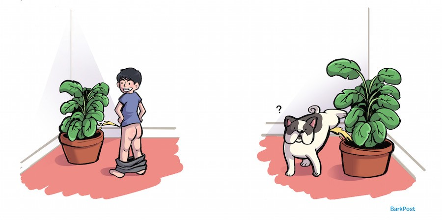 12 Things Your Dog Does that Would Have Totally Gotten You Grounded as a Kid