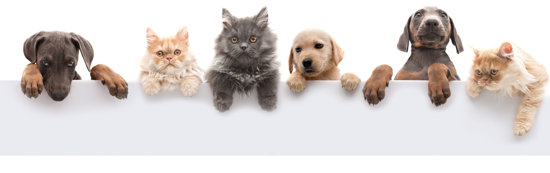pets blog header - Show Your Pet Some Love This February